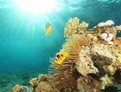 Private tours in Israel - Diving Tours