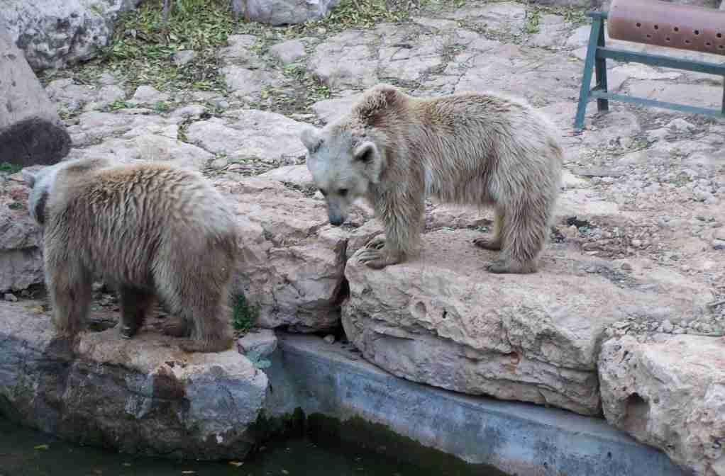 Best Zoos and Animal Safaris in Israel