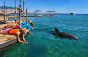 Private tours in Israel - Dolphin Reef Eilat