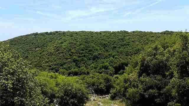 Forests that Bring Israel and Diaspora Together