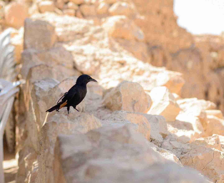 bird on top of masada